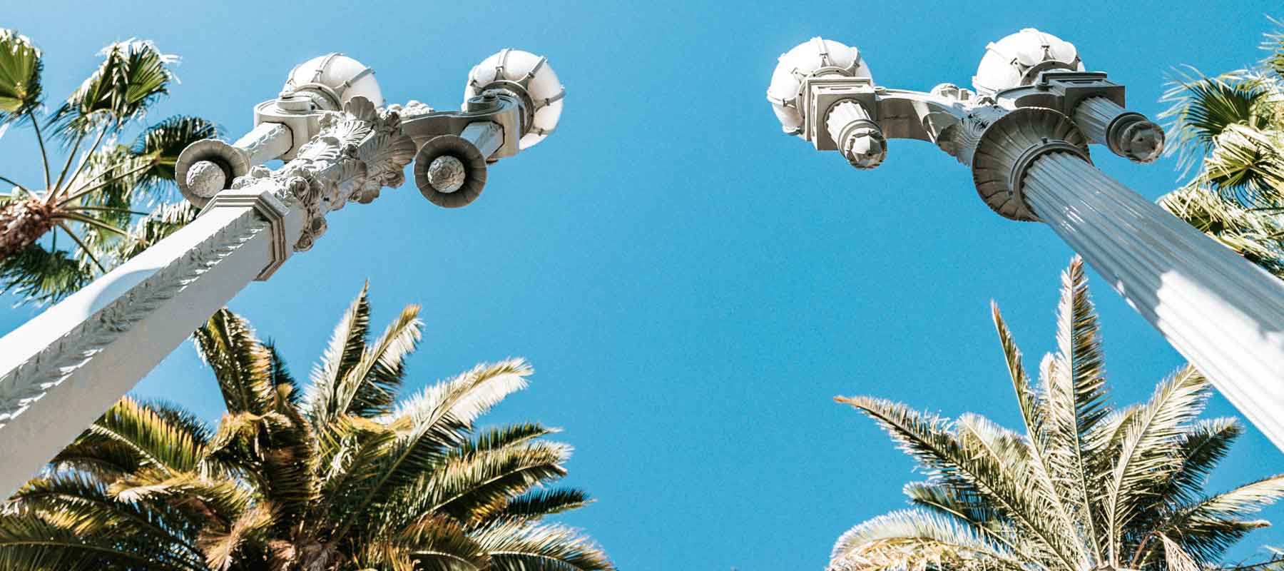 a worms eye view looking up at street lights and palm trees